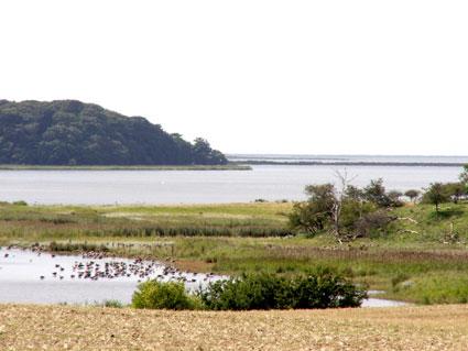Et kik ud over Holsteinborg Nor med Glænødæmningen i baggrunden. Grågæssene er begyndt at samles, inden de rejser syd på