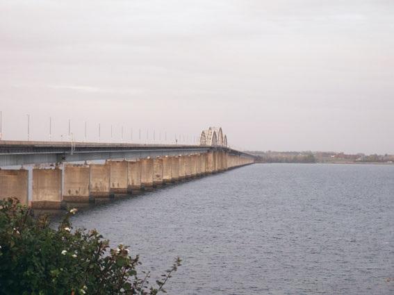 Storstrømsbroen virker som trækrute for småfuglene.