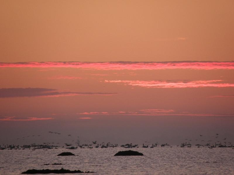 Morgen ved Rågø - omgivet af fugle.