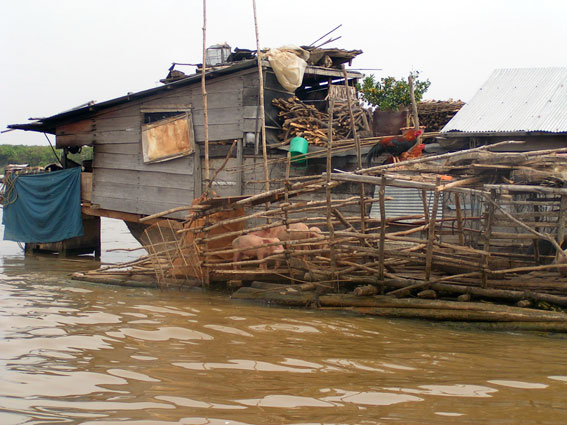 Mange vietnamesere lever i deres husbåde ud på søen. Her holder de også grise og høns.