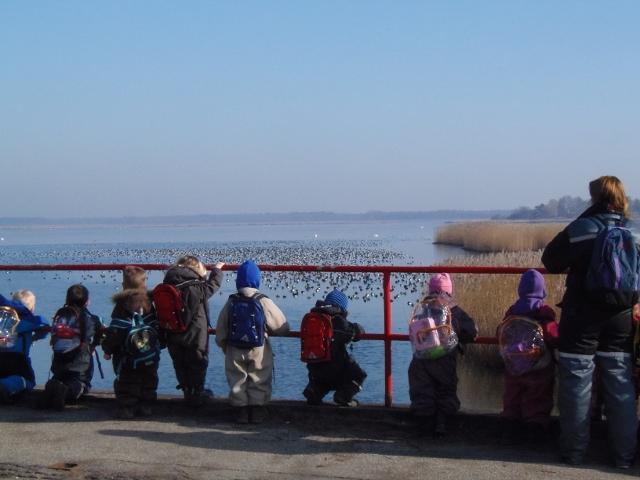 Børn fra Børnehaven Tusindfryd ser på en stor flok troldænder på deres naturtur.