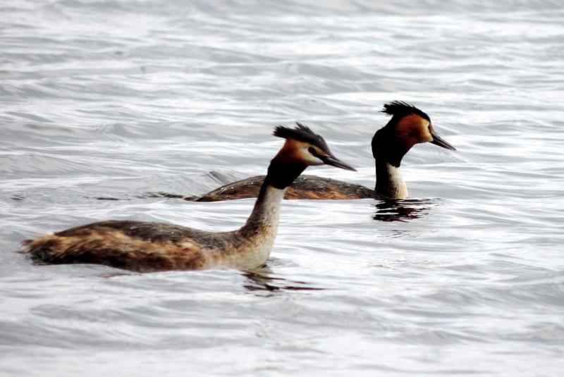 Et nydeligt par i Gødstrup Engsø