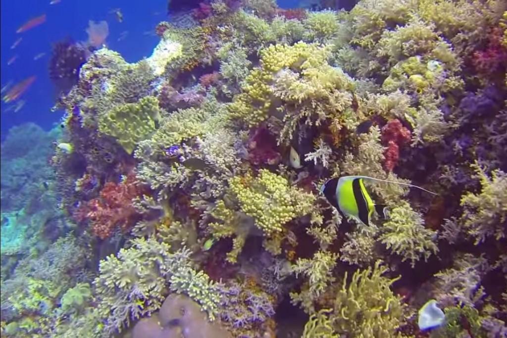 Koralrev