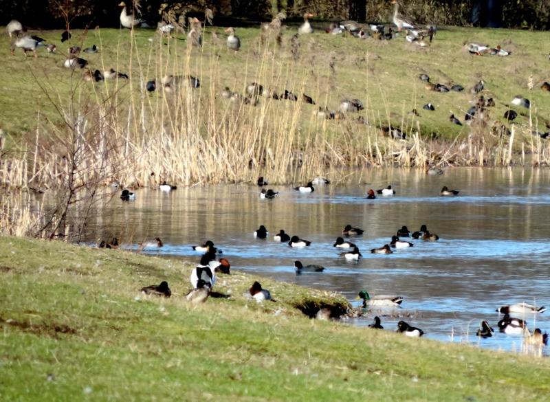 Fugle i og ved søen