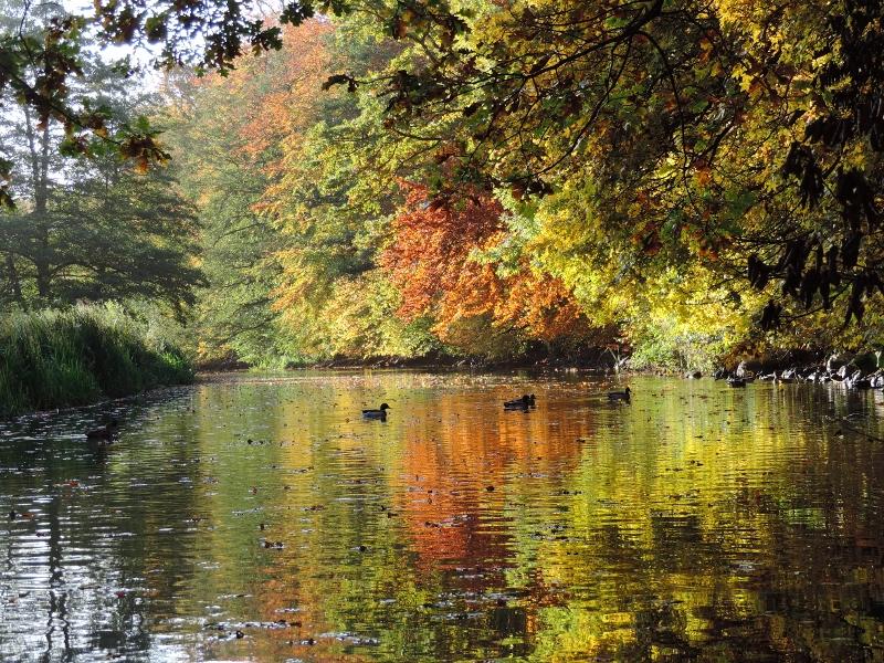 Efterårsfarver ved Susåen