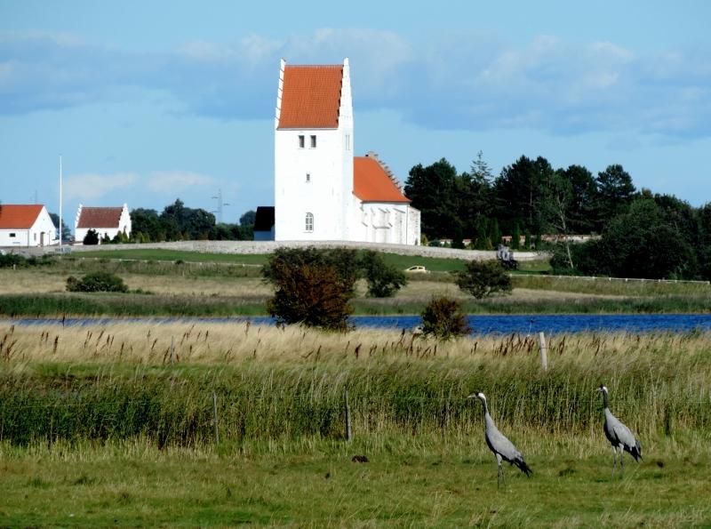 Fanefjord Kirke med traner i forgrunden.