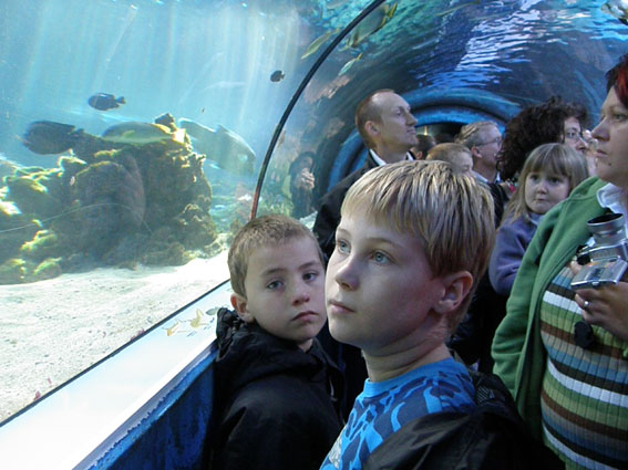 Lau & Tue ser på hajer i Meerescentrum