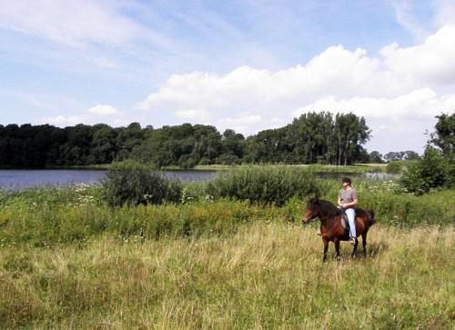 Kit Johansen, Ørslev på en Islænder foran Hejrede sø, med skoven hvor  ørnereden er i baggrunden.