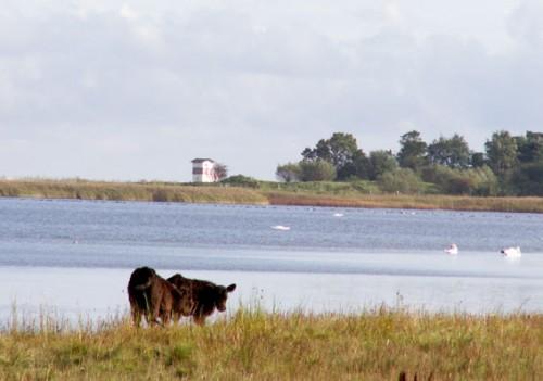Naturplejerne på Bøndersnes Egehoved med udsig til Fyret ved Roneklint.