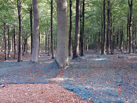 Der høstes frugter  (bog) fra bøgetræerne i Viemose Skov